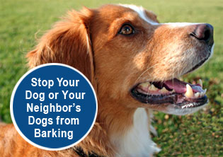 controlling a barking dog