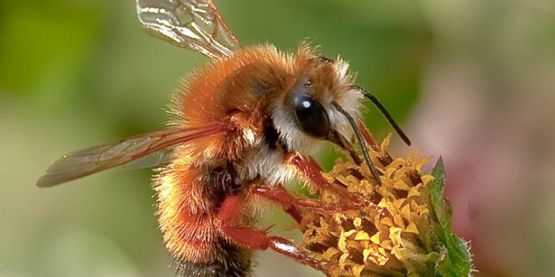 bees, wasps